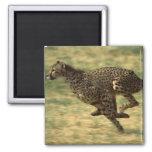 Funcionamiento del guepardo imán