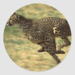 Funcionamiento del guepardo pegatinas
