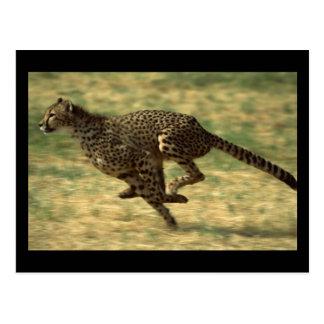 Funcionamiento del guepardo postales