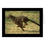 Funcionamiento del guepardo tarjetas