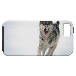 Funcionamiento del lobo gris iPhone 5 cárcasas