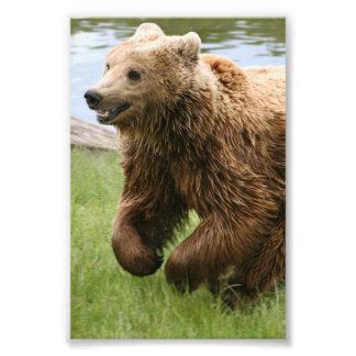 Funcionamiento del oso de Brown Cojinete