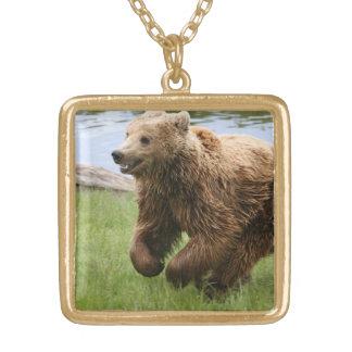 Funcionamiento del oso de Brown Joyerias