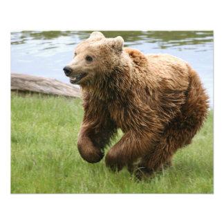 Funcionamiento del oso de Brown Flyer Personalizado