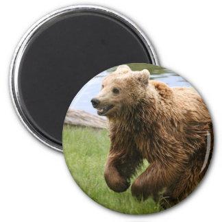 Funcionamiento del oso de Brown Imán Redondo 5 Cm