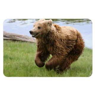 Funcionamiento del oso de Brown Iman Rectangular