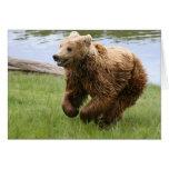 Funcionamiento del oso de Brown Tarjetas