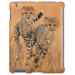 Funcionamiento joven de los guepardos (Acinonyx