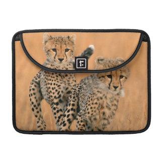 Funcionamiento joven de los guepardos (Acinonyx Fundas Para Macbooks