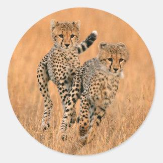 Funcionamiento joven de los guepardos (Acinonyx Pegatina Redonda