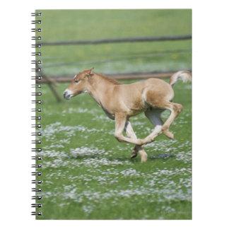 Funcionamiento joven del caballo libro de apuntes