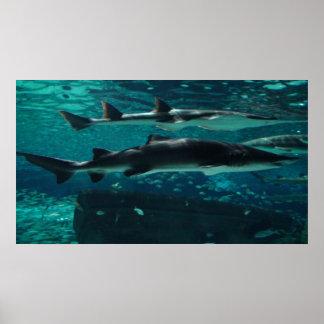 ¡Funcionamiento! ¡Tiburones! Posters
