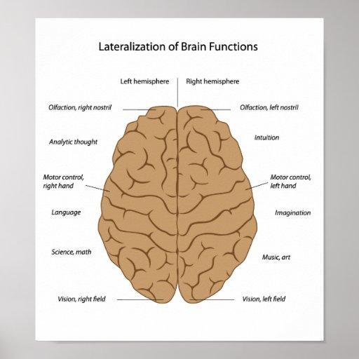 Funciones del poster del cerebro