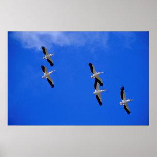 fünf Rosa Pelikane im Flug blauer Himmel Plakat