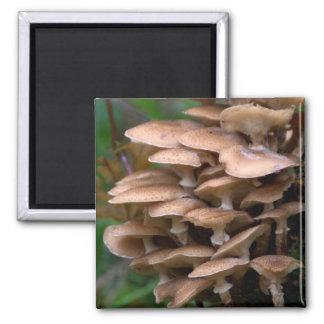 Fungi 2 Inch Square Magnet