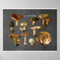 Fungi Art, Botanical Mushroom Print, Kitchen Decor