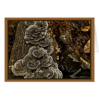 Fungi: Beauty in Nature Card
