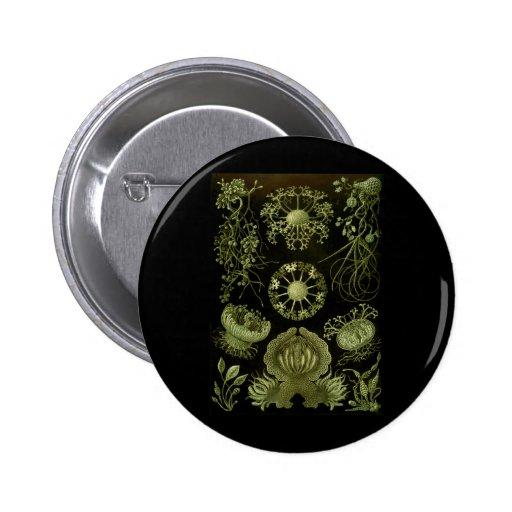 Fungi Button