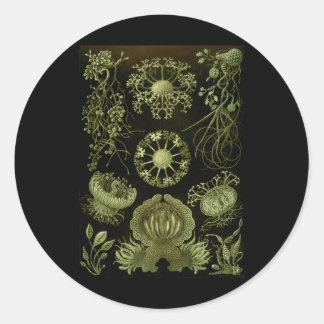 Fungi Classic Round Sticker