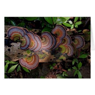 Fungi-covered Log in Hawaiian Rain Forest Greeting Card