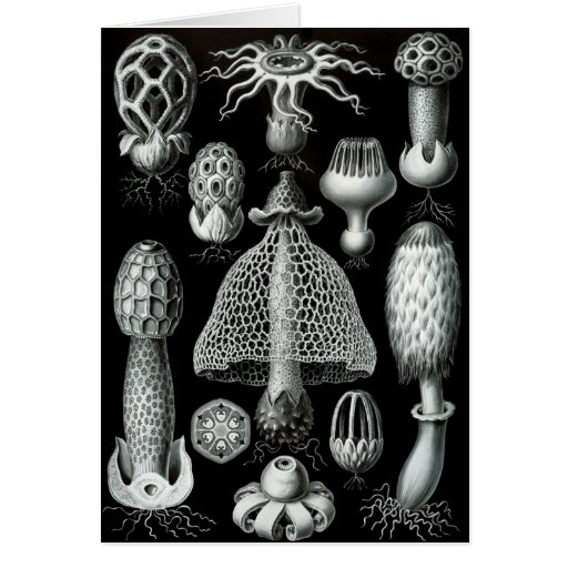 Fungi Greeting Cards