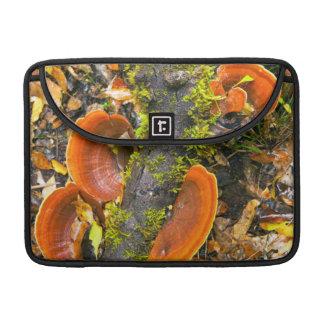 Fungi Growing On Branches, The Knysna-Amatole MacBook Pro Sleeve