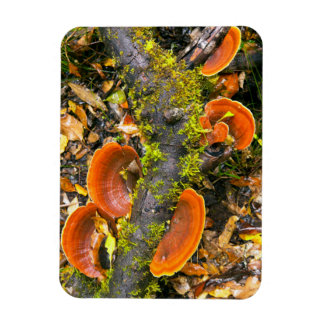Fungi Growing On Branches, The Knysna-Amatole Magnets