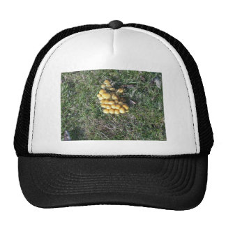 Fungi in the New Forest Trucker Hat