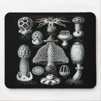 Fungi Mouse Pads