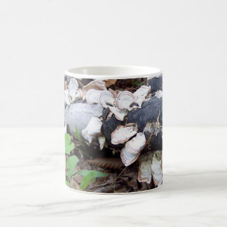 Fungi on fallen tree classic white coffee mug