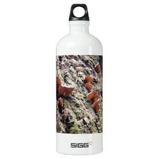 Fungi on redwood bark aluminum water bottle
