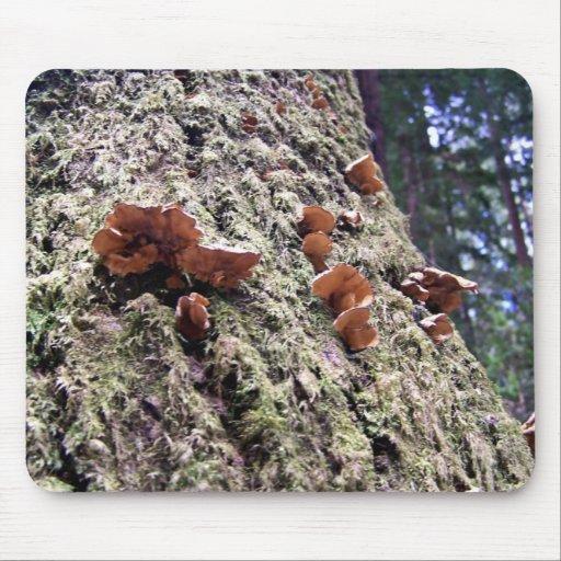 Fungi on redwood bark mouse pad