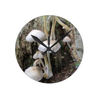 Fungi on tree round clock