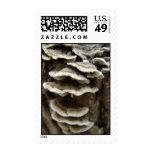 Fungi Postage Stamps