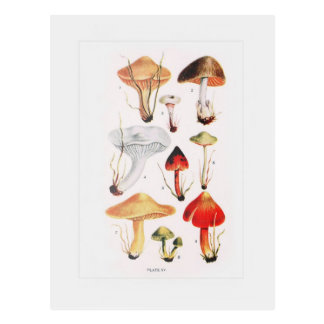 Fungi Post Card