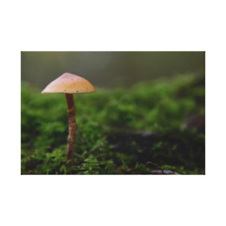 Fungus in the green moss canvas print