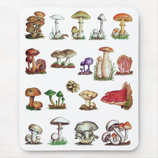 fungus mouse pad