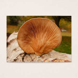 Fungus on birch ~ ATC Business Card