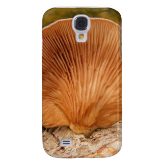 Fungus on birch ~ case