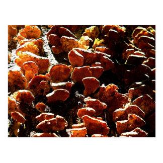 Fungus Scale on Tree Postcard
