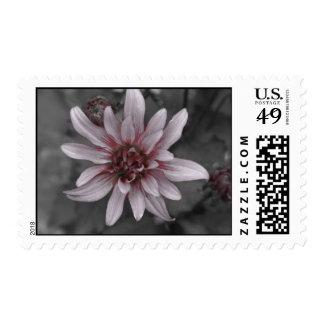 Funk Postage Stamp