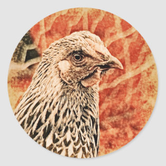 Funky Baby Chicken Silver Laced Wyandotte Pullet Stickers
