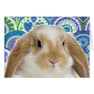 Funky Bunny Greeting Cards