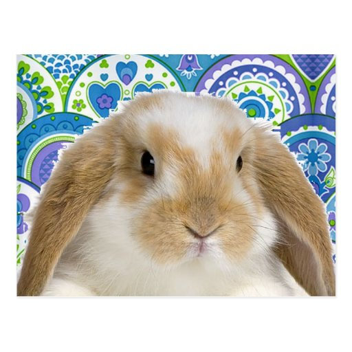 Funky Bunny Post Cards