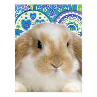 Funky Bunny Postcard