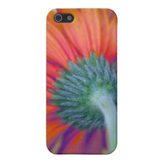 Funky Gerbera iPhone SE/5/5s Case