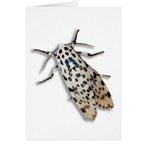 Funky Moth Greeting Card