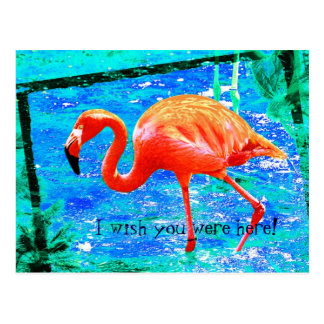 Funky pink flamingo travel postcard