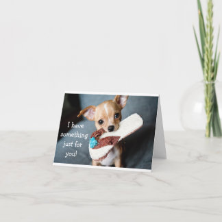Funny adorable chihuahua dog birthday card