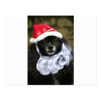 Funny & Adorable Santa Claus Dog With Beard Postcard